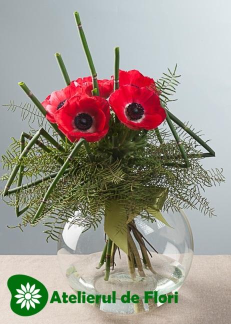 flori 8 martie 2013 anemone rosii
