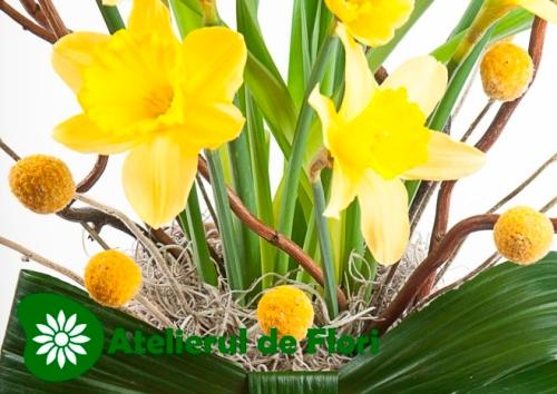 Flori pentru 8 martie 2013 narcise