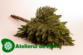 Rumora - leather fern