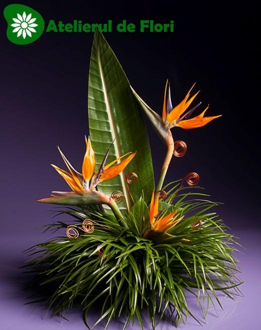 Aranjament floral cu strelitia