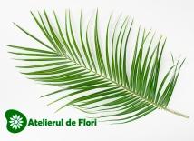 Frunza de palmier roebelini