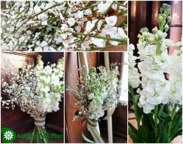 Două flori interesante: Ginster şi Matthiola(6)