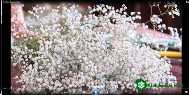 Gipsofila floarea miresei